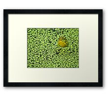 Is it safe to come out? Framed Print
