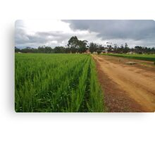 Cereal Crop at New Norcia Canvas Print