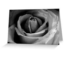 BW Rose ll  Greeting Card
