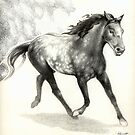 Appaloosa Stallion by Patricia Howitt