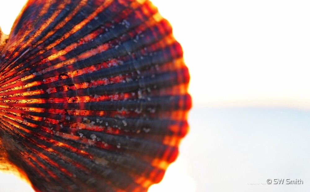 Seashell Bathed In Sunlight | Mattituck, New York by © Sophie W. Smith