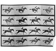 Muybridge Horse Photographic Horse Motion Study Poster