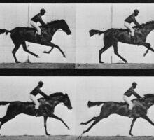 Muybridge Horse Photographic Horse Motion Study Sticker