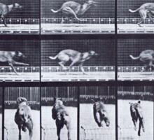 Muybridge - Photographic Study of Dogs in Motion Sticker