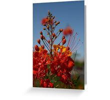 Red Mexican Bird of Paradise Greeting Card