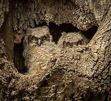 THE OWLS OF EPHRATA by Diane Peresie