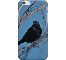 Black bird, blue sky iPhone Case/Skin