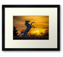 A Steed fit for a Queen.. Framed Print