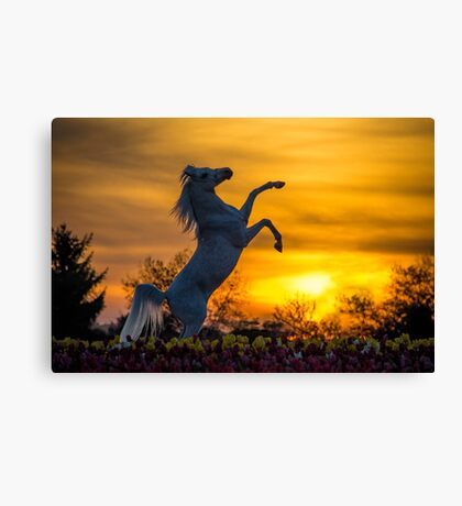 A Steed fit for a Queen.. Canvas Print