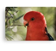 King Parrot at Lake Conjola  Canvas Print