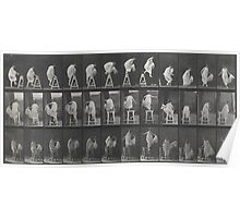 Eadweard Muybridge - Photographic Motion Study Poster