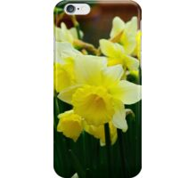 Silicon Valley Daffodils iPhone Case/Skin