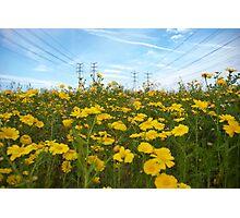 electric daisies Photographic Print