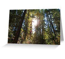 McKenzie River Sun Greeting Card