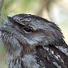 Frogmouth close up  by Virginia McGowan