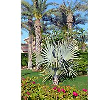 Natural background with palm trees. Photographic Print