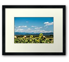 sunflowers field in the italian countryside Framed Print