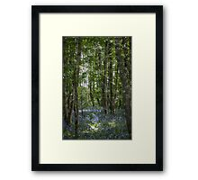 painting style image of bluebell wood in spring Framed Print