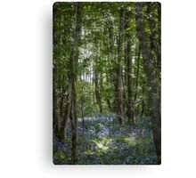 painting style image of bluebell wood in spring Canvas Print