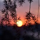 Sunset by Gail Fletcher