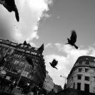 Pigeons of Piccadilly by Nicholas Coates