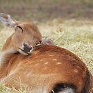 Oh deer by Georgie Hart