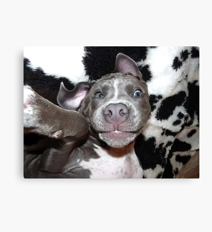Silly, Baby, Blue Pit Bull Puppy Dog  Canvas Print