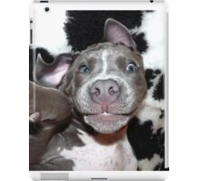 Silly, Baby, Blue Pit Bull Puppy Dog  iPad Case/Skin