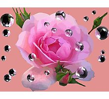 Pink Rose in Spring Photographic Print