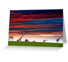 giraffes resting in the sunset Greeting Card