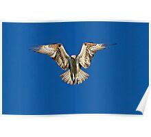 Hunter - Osprey Poster
