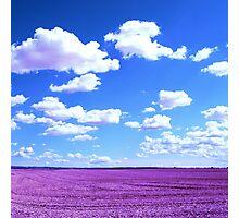 Purple Field Photographic Print