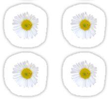 White Daisy on Blue Sticker