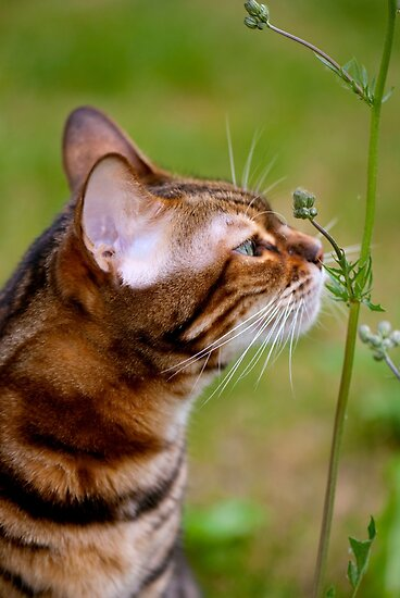 Smelling the flowers by evilcat