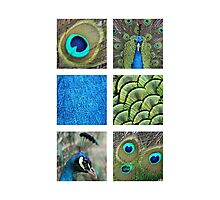 A collage of pictures of male peacocks Photographic Print