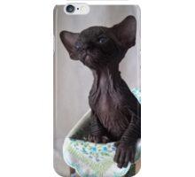 Baby black sphynx cat  iPhone Case/Skin