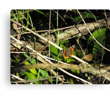 Pretty Red Admiral Butterfly Canvas Print
