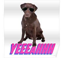Cool Dude Doggo Poster