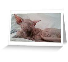 Tortie choccolate sphynx sleeping Greeting Card