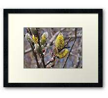 Soft and Furry Spring Framed Print