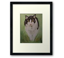 Kitty in the grass Framed Print