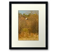 Hawk watches mouse. Photog watches hawk. Local Constabulary watches Photog... It's a win-lose game we all play Framed Print