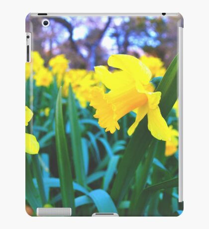 Spring Time Daffodils 2 iPad Case/Skin