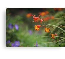 Montbretia, Orange Wild Flowers Canvas Print