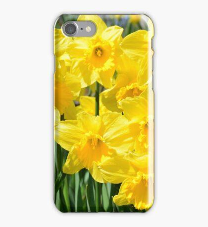 Spring Daffodils iPhone Case/Skin