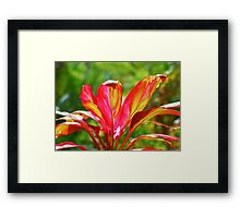 Ti Plant Good Fortune Framed Print