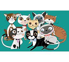 Cartoon Pets So Many Cats Cat Lover Photographic Print