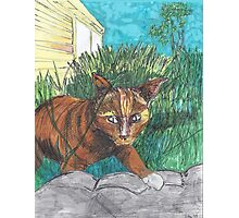 Tig in the Jungle  Photographic Print
