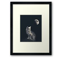 Cat in night Framed Print