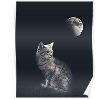 Cat in night Poster